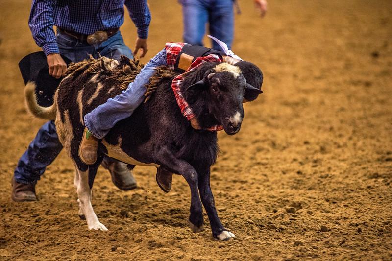 Rodeo_552.jpg