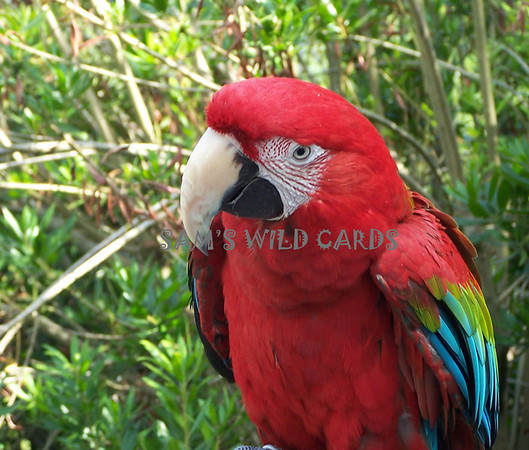 Sam's Wild Cards-Wise Birds