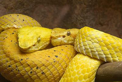 Serpentarium-Wilmington, NC 8-20-11