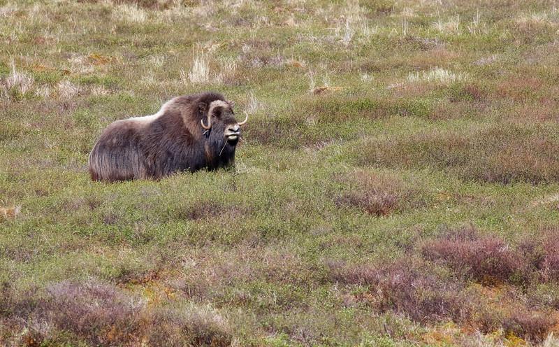 Alaska Day 2 7D 2015 218.jpg