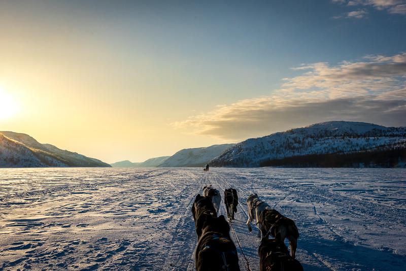 Husky Adventure - Kirkenes-7553.jpg