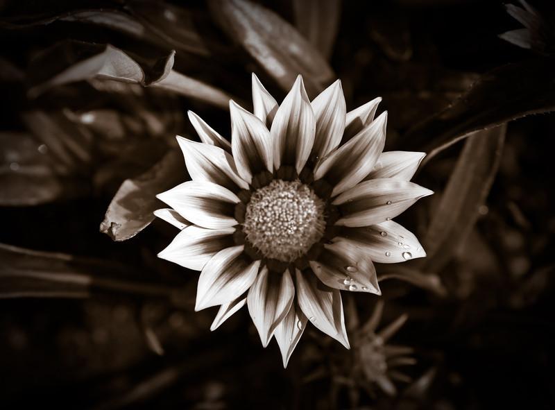 flowers june 2011-28.jpg