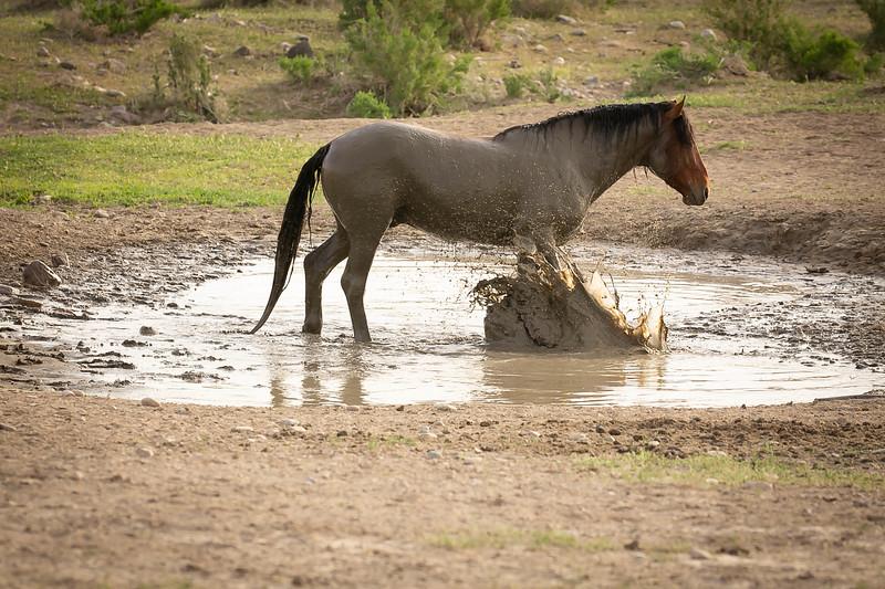 Splashing horse.jpg