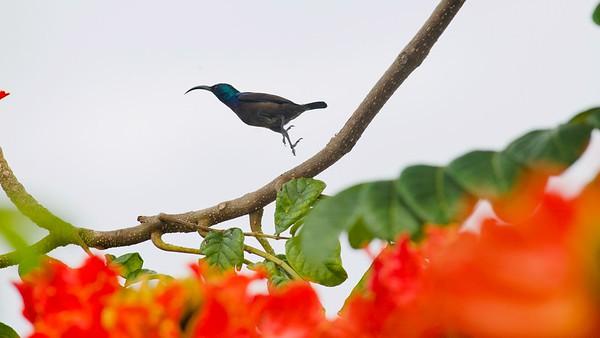 Birdy Neighbours at Elan