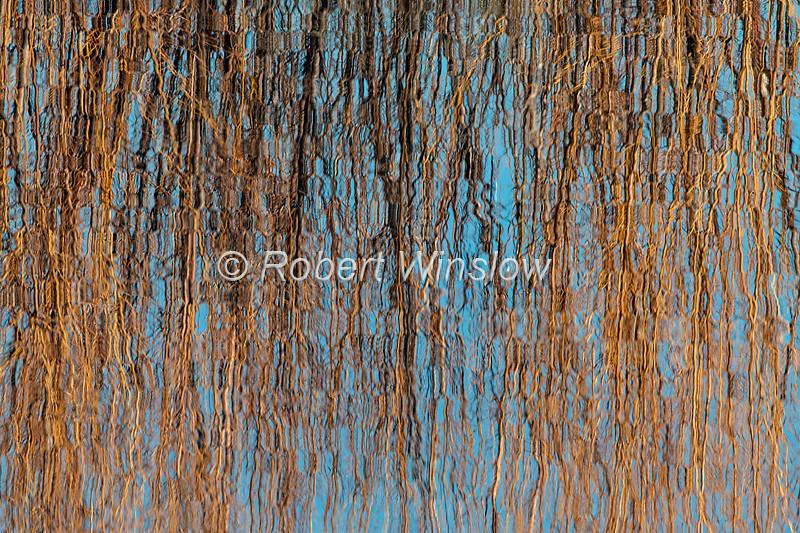 Reflections, Bosque del Apache NWR, New Mexico