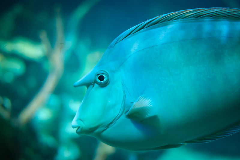 Seattle 201208 Aquarium (33).jpg