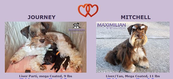 Journey & Mitchell Puppies, DOB 3/22/2021