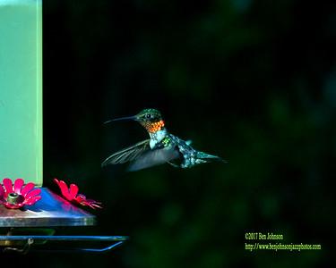 Hummingbird July 2017