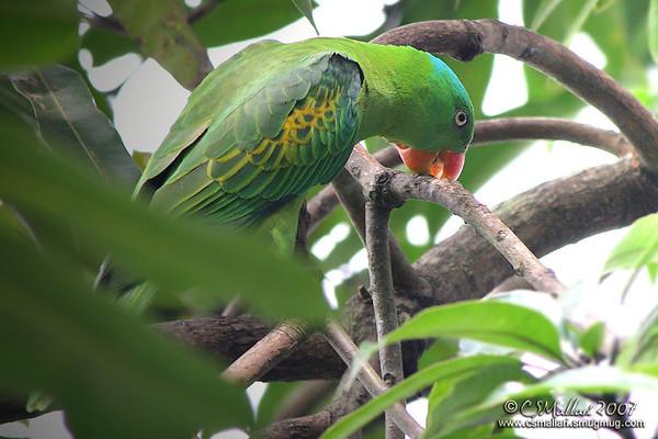 Ayala Alabang Birds