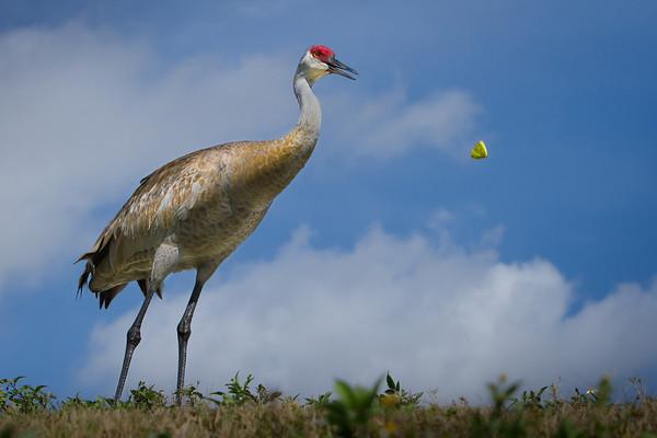 Merritt Island Wildlife Refuge and Viera Wetlands in Florida