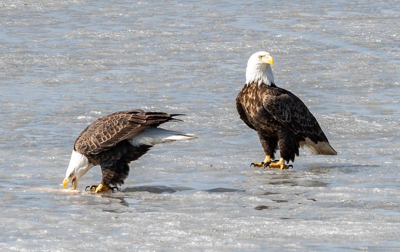 03-17-2020-eagles-8.jpg
