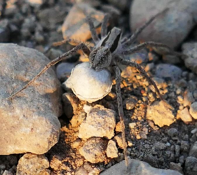 Spider P3150311.jpg