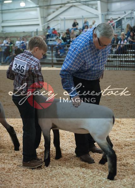 Mkt. Lambs