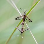 Lepidoptera (butterflies, moths)