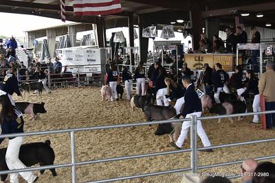 CRF Livestock Show - Swine 2018