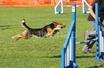 National Agility Melbourne