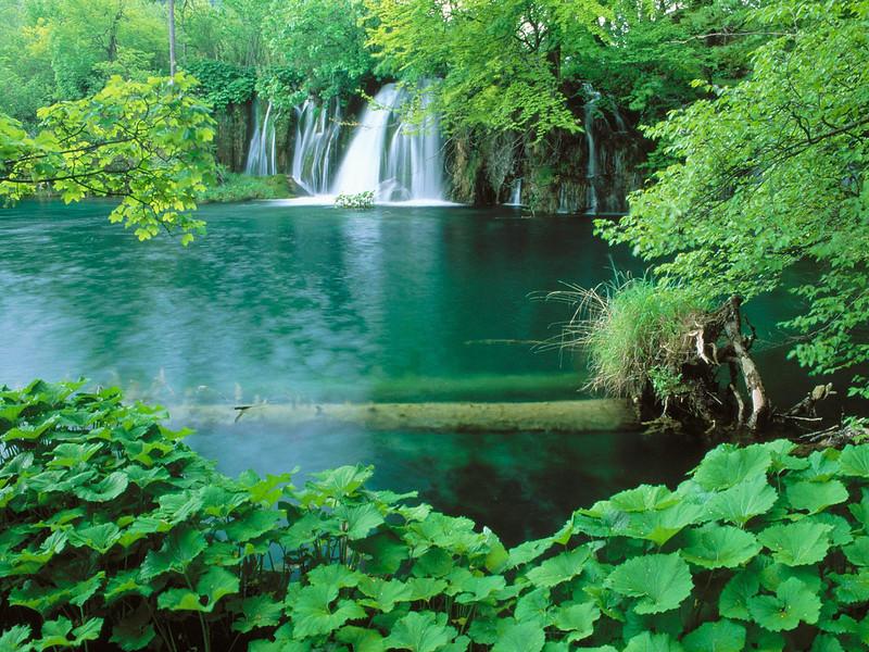 Nature15.jpg