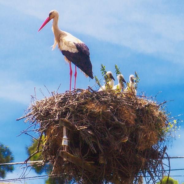 Storks & Wildflowers