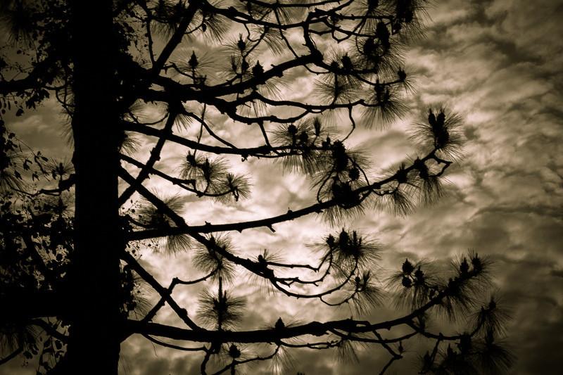 mar 20 - branches.jpg