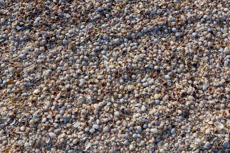 Shells, Even More