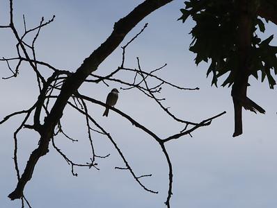 Bird on dead branch 061820