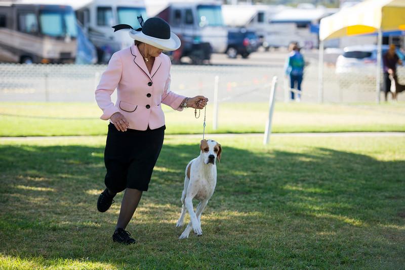 2013 Santa Barbara Dog Shows