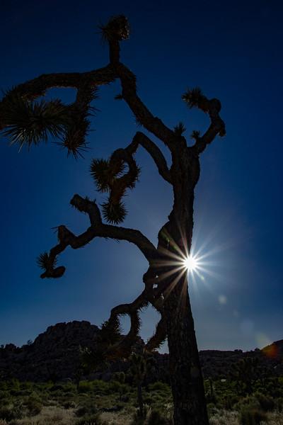 johua-tree-np-v1.jpg
