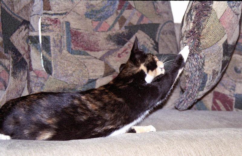 2003 12 - Cats 56.jpg