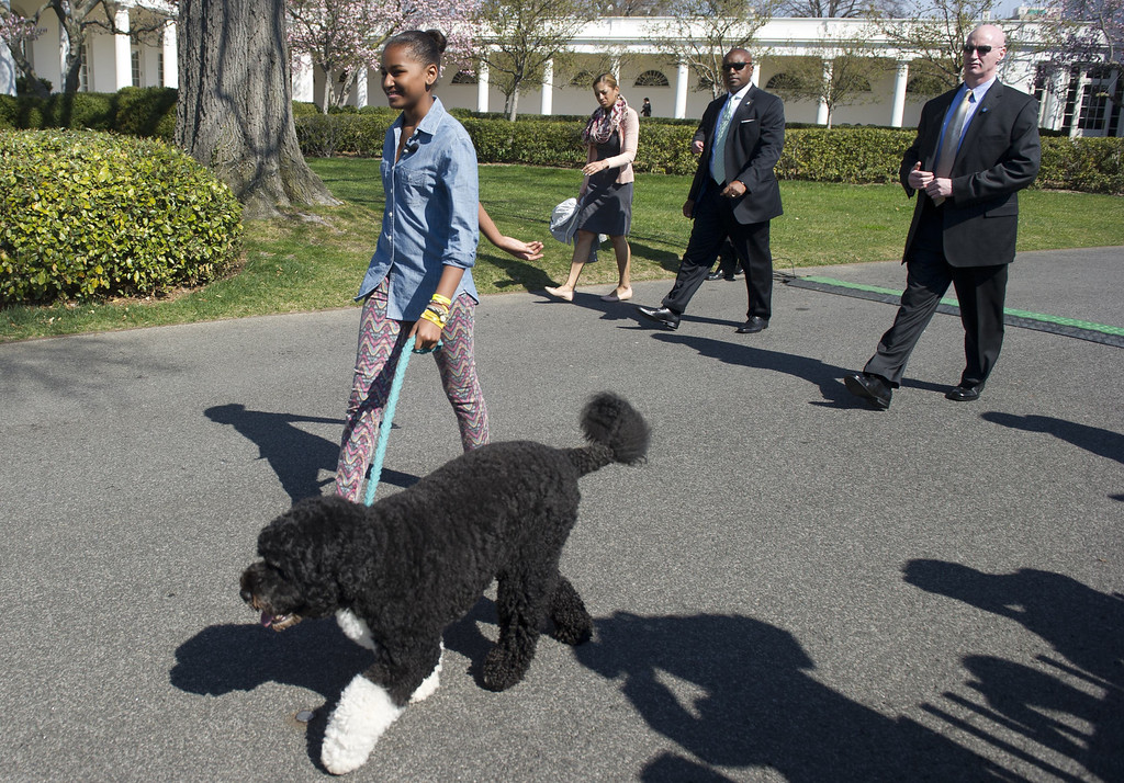 . Sasha Obama, US President Barack Obama\'s daughter, walks their dog Bo during the White House Easter Egg Roll on the South Lawn of the White House in Washington, DC, April 1, 2013. Obama hosts the annual event, featuring live music, sports courts, cooking stations, storytelling and Easter egg rolling. AFP PHOTO / Saul LOEB/AFP/Getty Images
