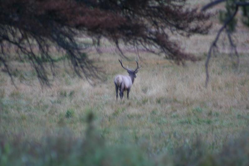 20080911-06 - Rocky Mountain NP - 03 Elk.JPG