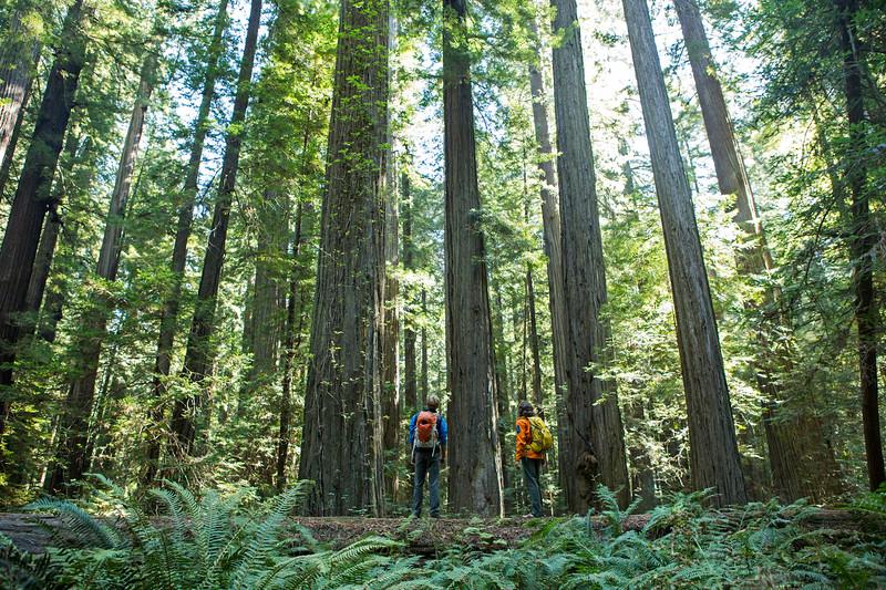 20121002_Redwood-269.jpg