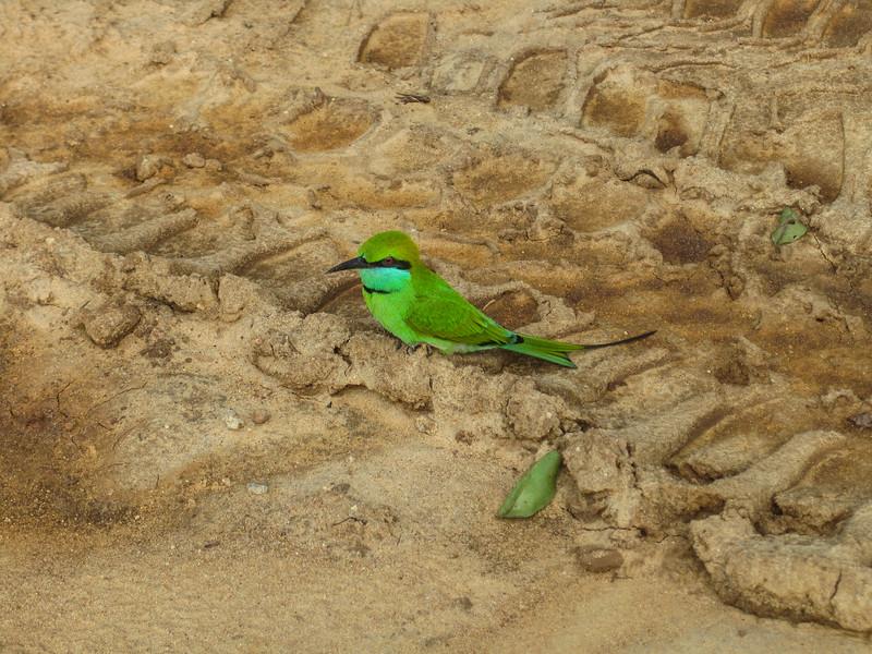 Sri_Lanka17-9775.jpg