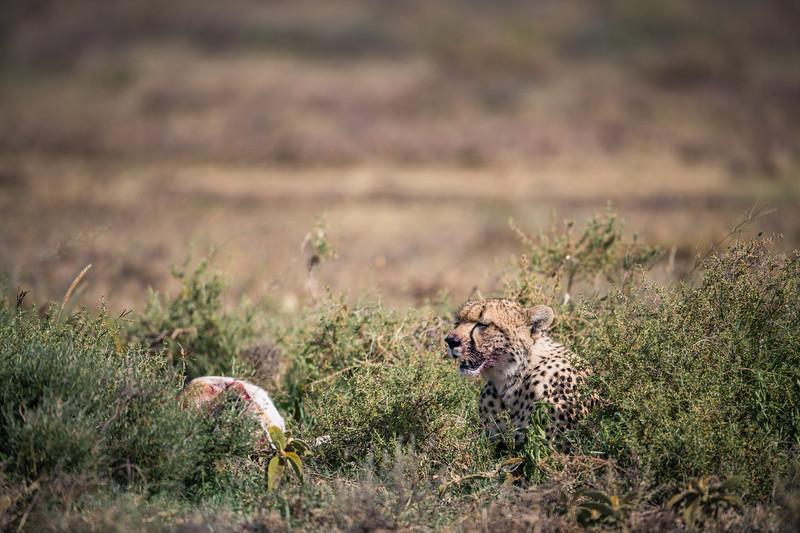 Tanzania_Feb_2018-868.jpg