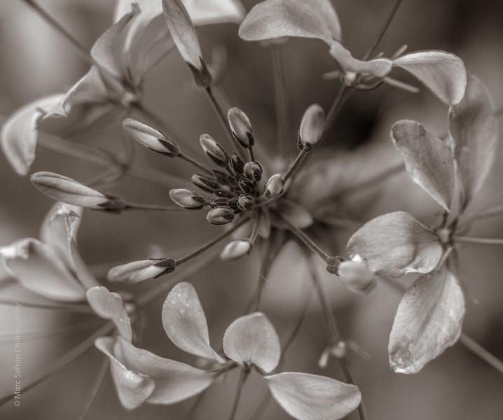 0715_Garden_Macro-98.jpg