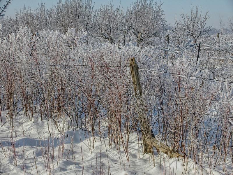 Ice Storm III.jpg