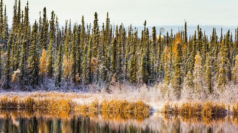 A fresh September snowfall sticks to the trees near Ballaine Lake on the Fairbanks campus. UAF Photo by Todd Paris.