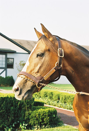 Airdrie Stud