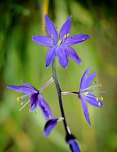Scatter Creek Wildflowers May 16, 2021