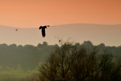 Birds-Landscapes