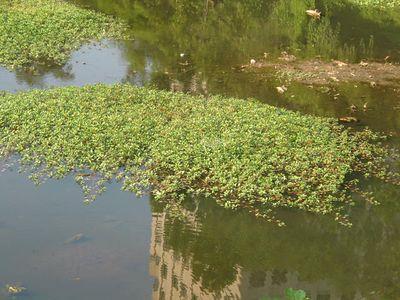 Ballston Beaver Pond Plant Photo Gallery
