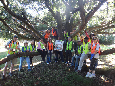 9.29.13 Invasive English Ivy removal at CCBC w/Catonsville Tree Savers