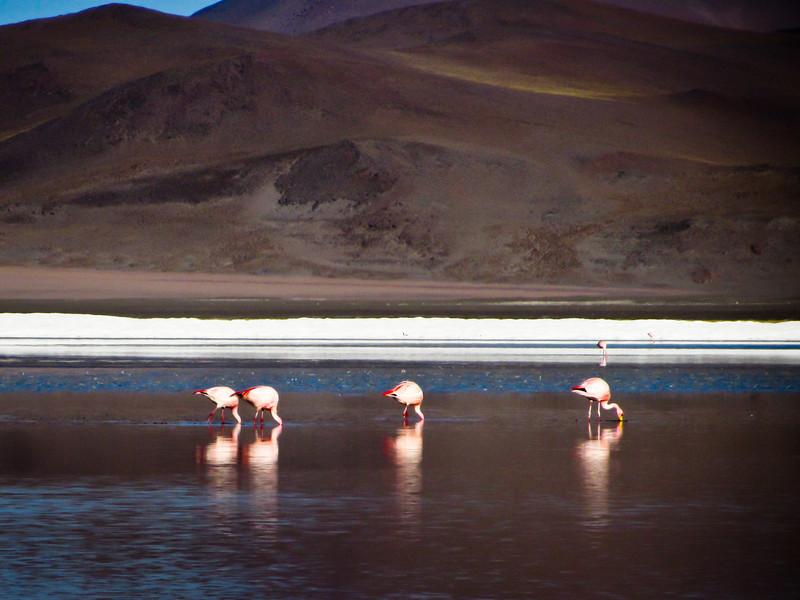 Tupiza to Uyuni 20120529 (72a).jpg