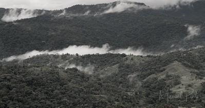 Turialba Rainforest