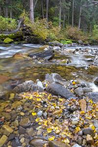 Yellow Waders