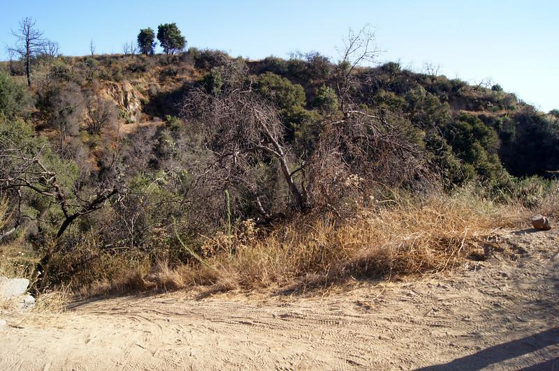 20110825015-El Prieto Trailwork Banner.JPG