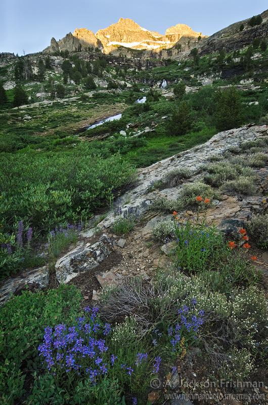 Alpine garden in Nevada's Ruby Mountains, July 2011.