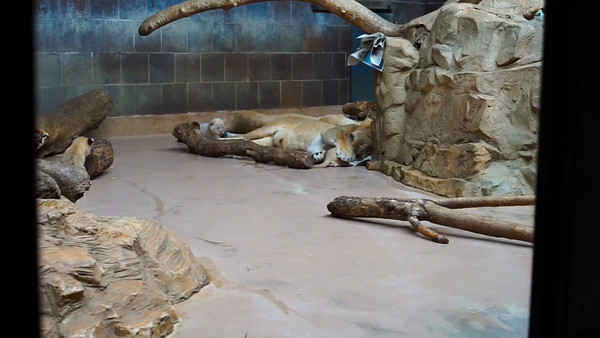 2014 Henry Doorly Zoo