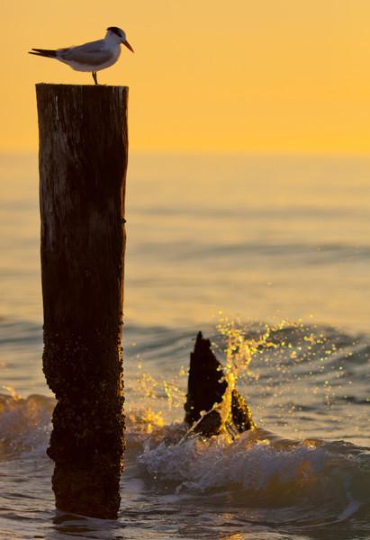 20110104_Naples_Beach_Sunset_0033.jpg