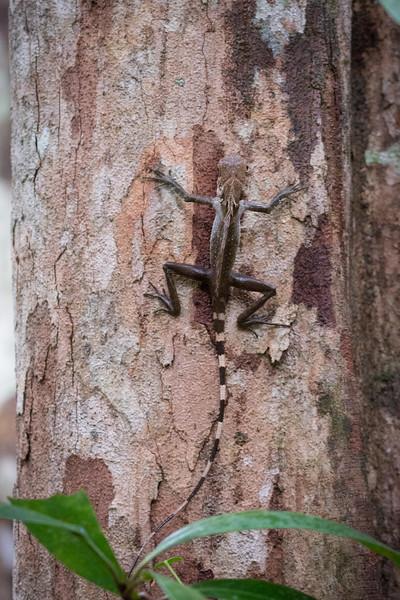Borneo-2014-204.jpg
