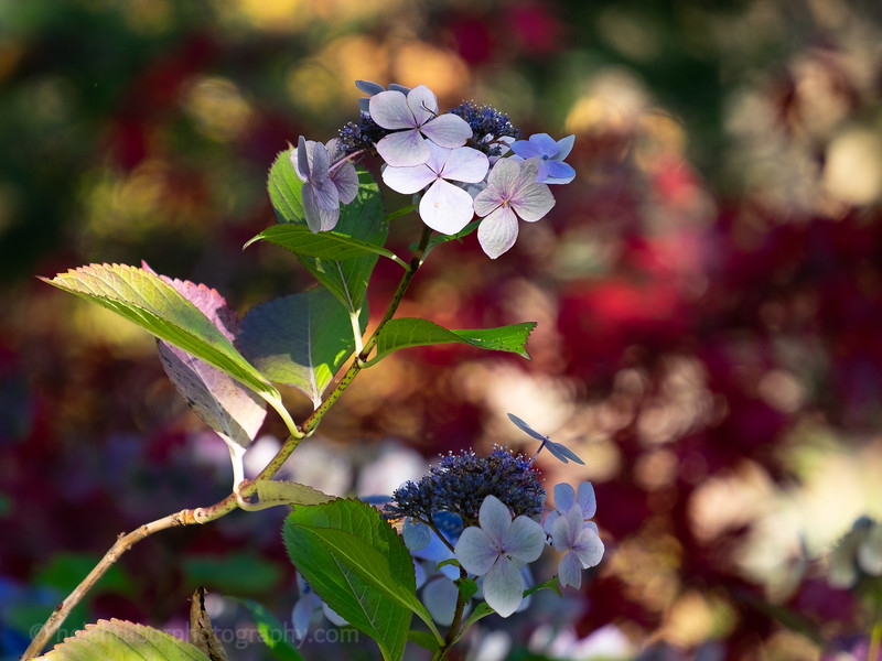 Himalayan Garden Oct 18-10.jpg